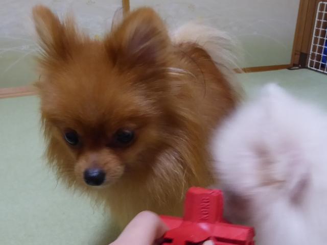 20151001ポンころ争い②