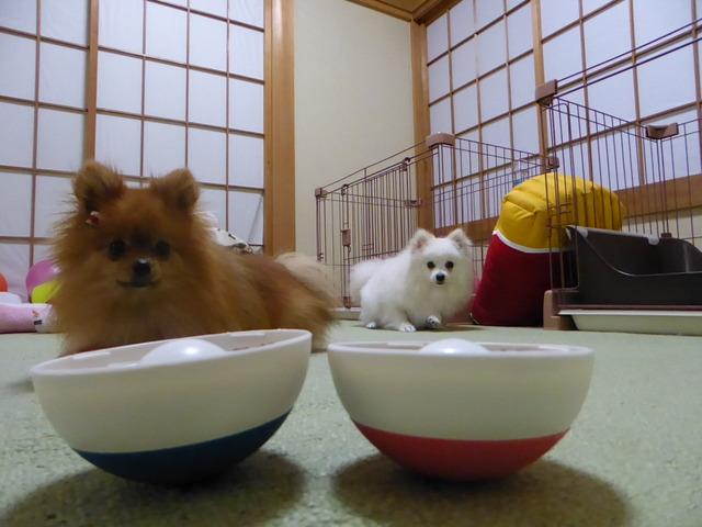 20160409ポンころ朝食②