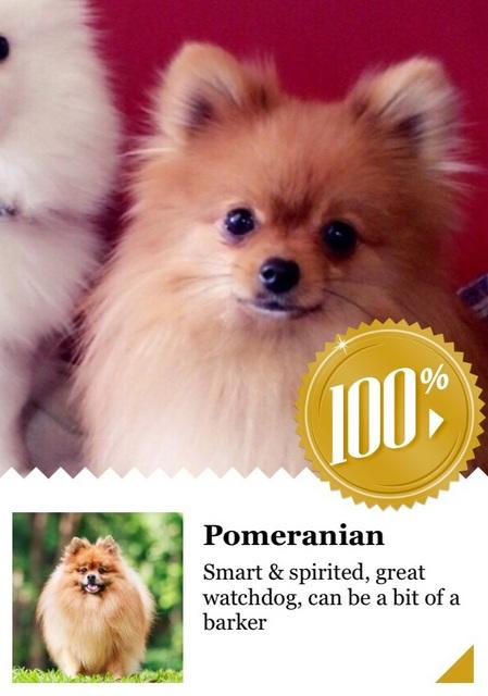 20160505ポン太犬種判定①