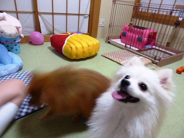 20160620ポンころウマウマ①