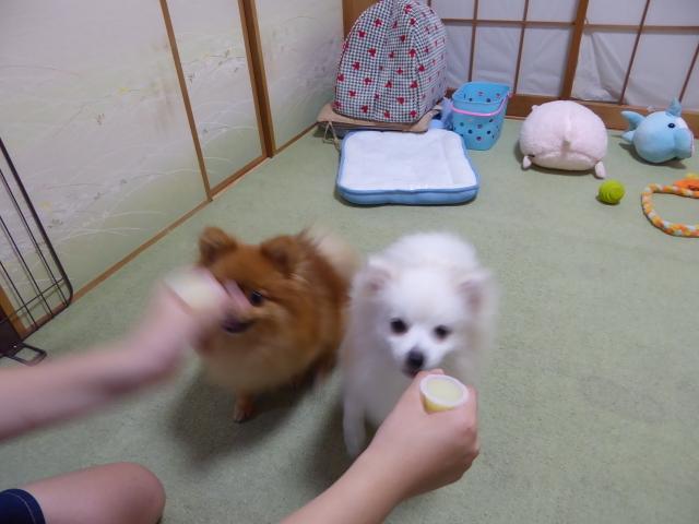20160623ポンころゼリー②