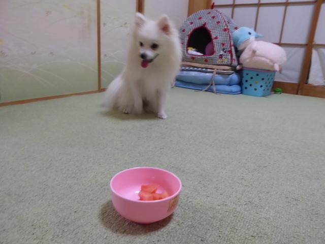 20160626ポンころスイカ④