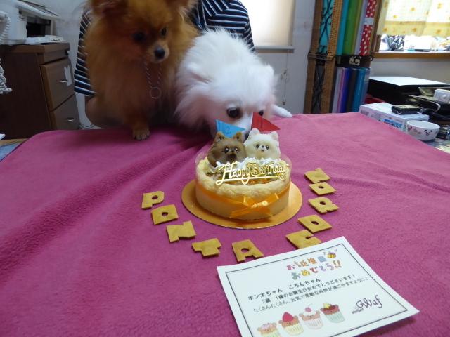 20160626ポンころケーキ③