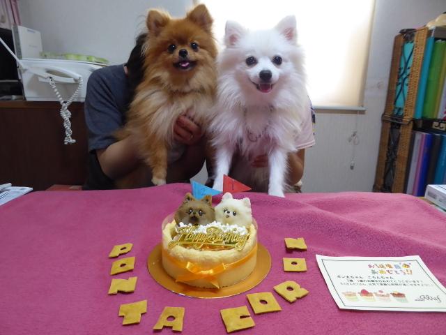 20160626ポンころケーキ④