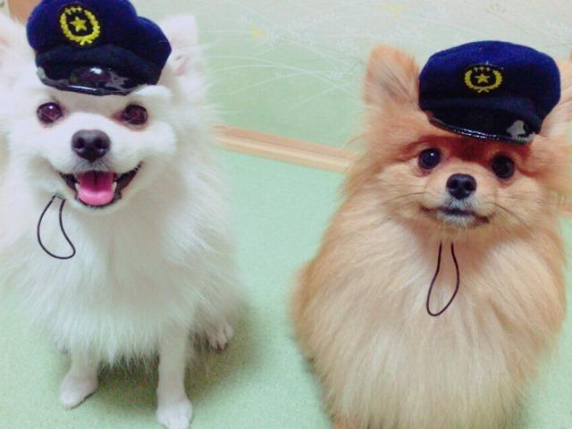 20160827犬のおまわりさん①