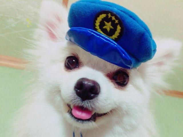 20160827犬のおまわりさん②