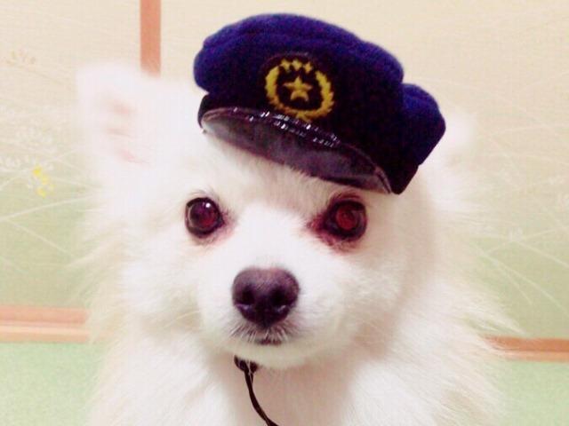 20160827犬のおまわりさん③