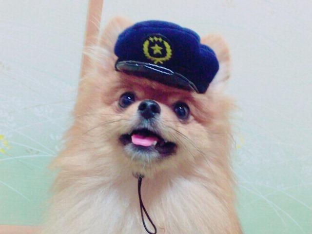 20160827犬のおまわりさん④