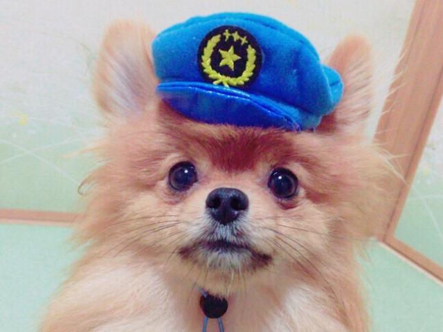 20160827犬のおまわりさん⑤