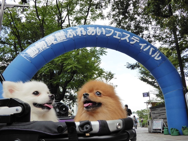 20160917ポンころ動物愛護ふれあいフェス②