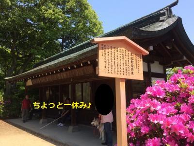 IMG_9237_convert_20160706212004.jpg