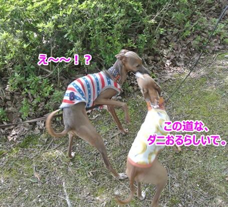 DSC_2884_2016061315030278c.jpg
