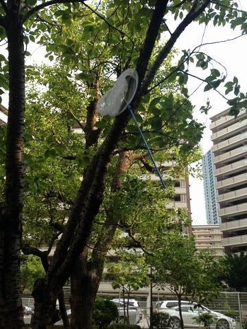 木の上の虫取り網