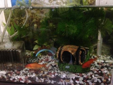 金魚水槽水草