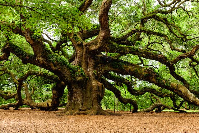 angel-oak-4.jpg
