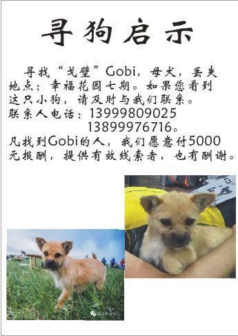 GOBI 5