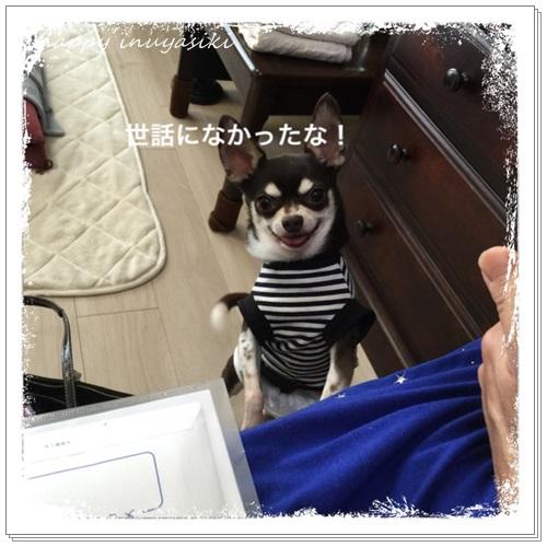 mini16IMG_0332-20160712.jpg