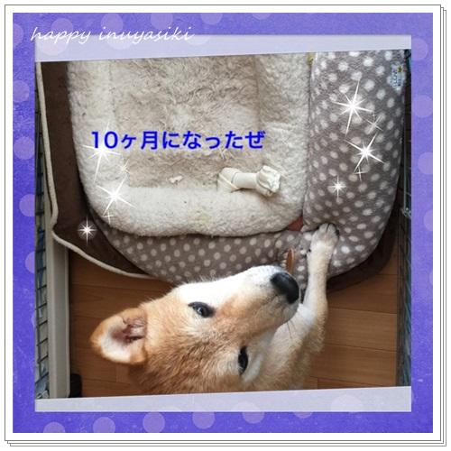 mini16IMG_0802-20160719.jpg