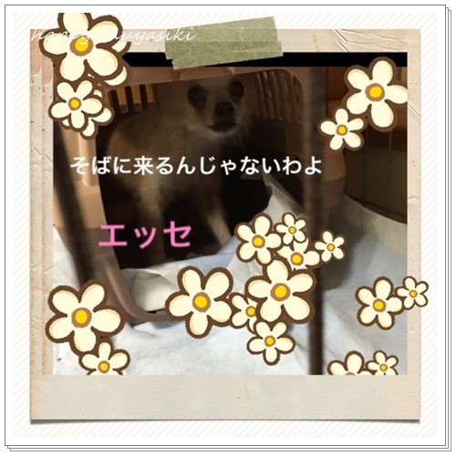 mini16IMG_1441-20160726.jpg