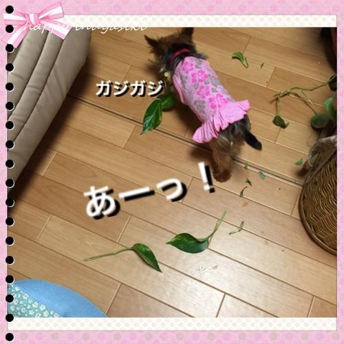 mini16IMG_2387-20160803.jpg