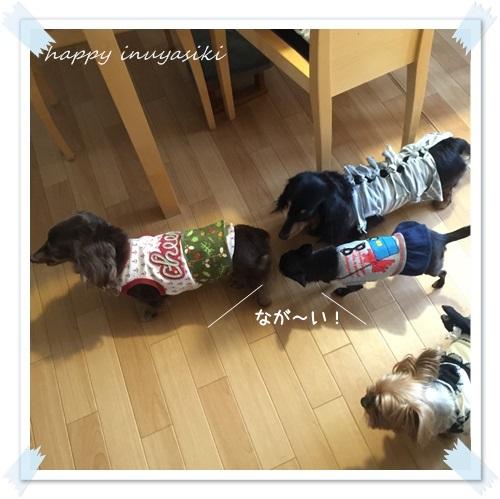 mini16IMG_3873-20160418.jpg