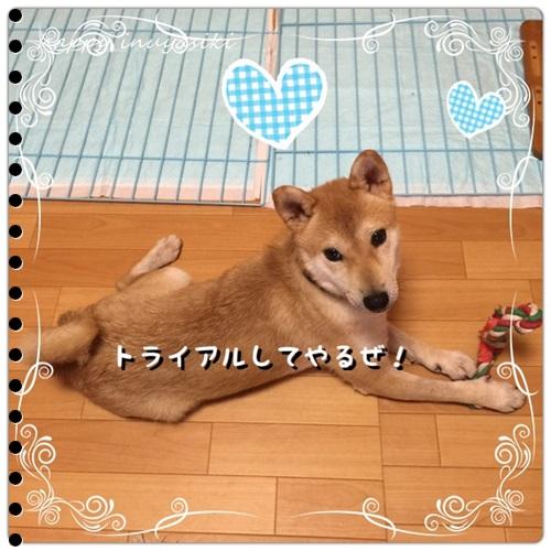 mini16IMG_4276-20160824.jpg