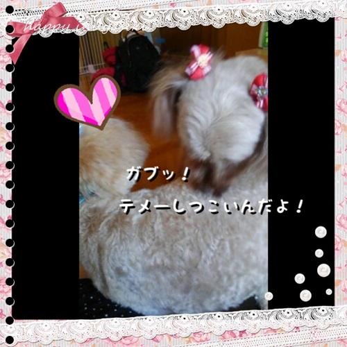 mini16IMG_4364-20160826.jpg