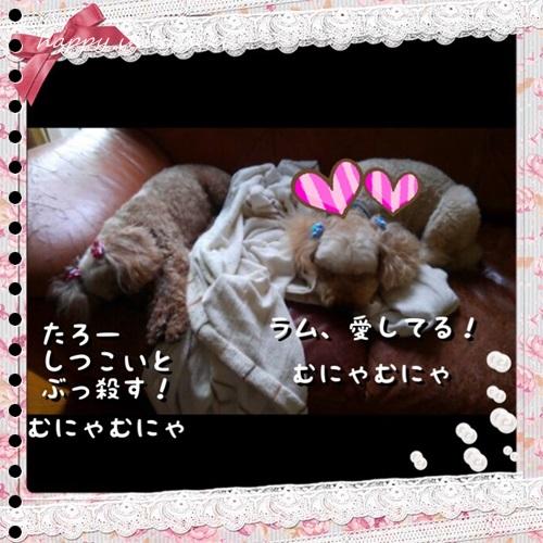mini16IMG_4365-20160826.jpg