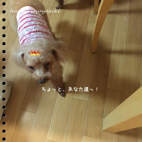 mini16IMG_4457-20160828.jpg