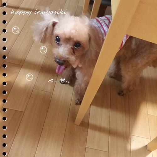 mini16IMG_4460-20160828-2.jpg