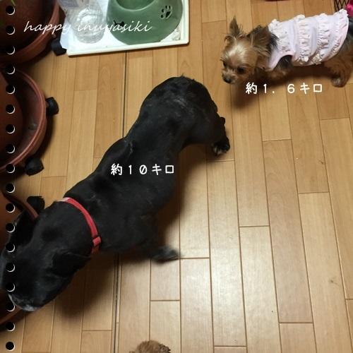 mini16IMG_4702-20160902.jpg