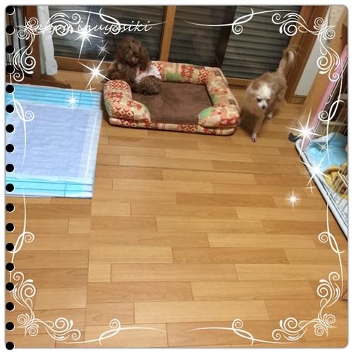 mini16IMG_4744-20160902.jpg