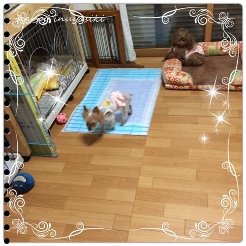 mini16IMG_4745-20160902.jpg