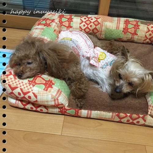 mini16IMG_4775-20160902.jpg