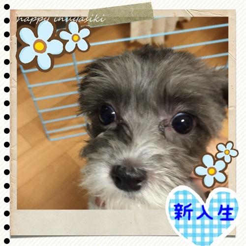 mini16IMG_5360-20160908.jpg