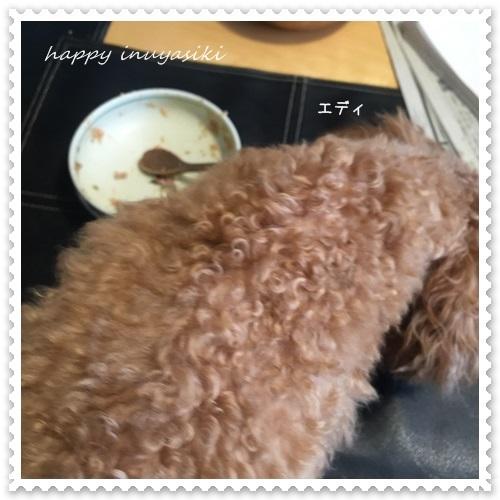 mini16IMG_5425-20160506.jpg