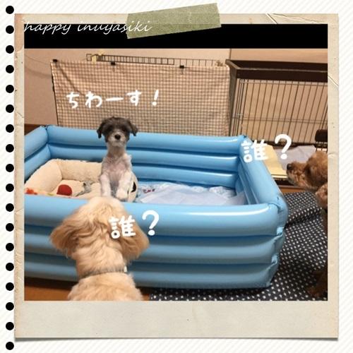 mini16IMG_5431-20160909.jpg