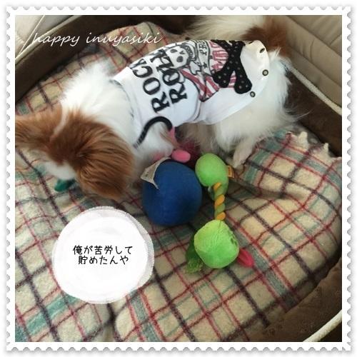 mini16IMG_5437-20160506.jpg