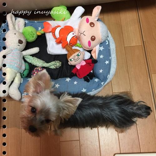 mini16IMG_5689-20160913.jpg