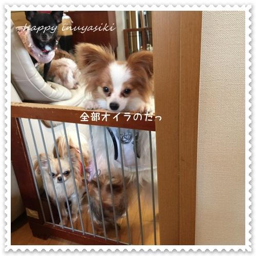 mini16IMG_5765-20160511.jpg