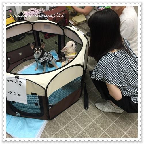 mini16IMG_6713-20160523.jpg