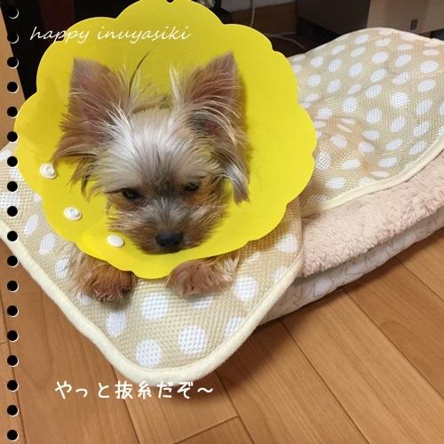 mini16IMG_7159-20161004.jpg