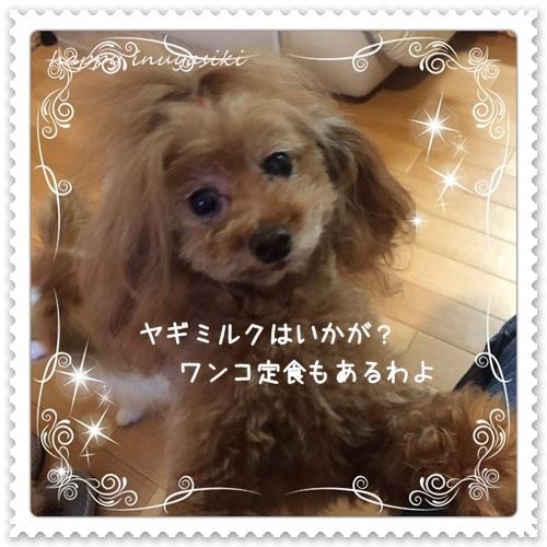 mini16IMG_7283-20160527-2.jpg