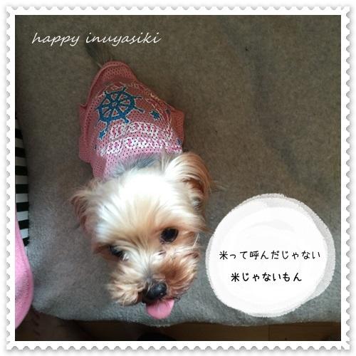mini16IMG_7702-20160603.jpg