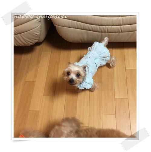 mini16IMG_8409-20160613.jpg