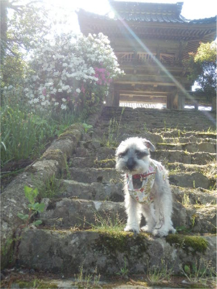 慶願寺の山門にて