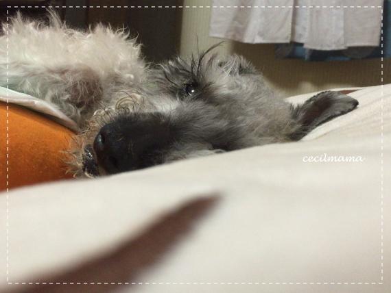 眠いセシル
