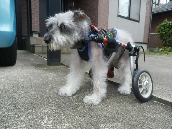 車椅子のセシル_1