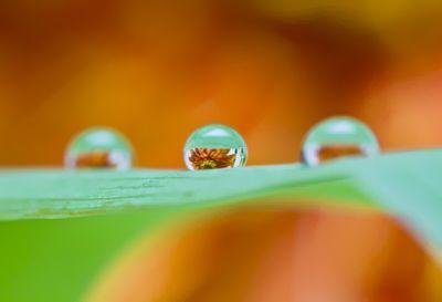 雨と水滴と花