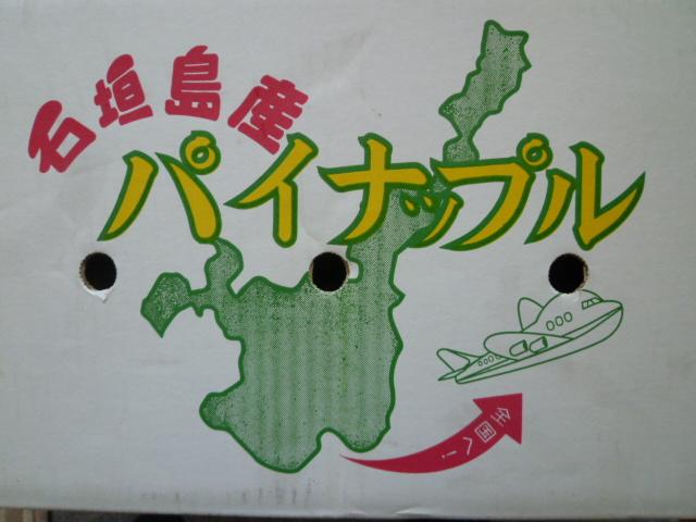 石垣島 パイナップル
